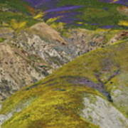 Wildflowers Up The Hills Of Temblor Range At Carrizo Plain National Monument Poster