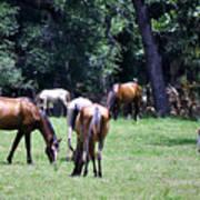 Wildhorses Of Cumberland Poster