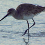 Willet In The Surf Poster