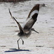 Willet Take-off Poster