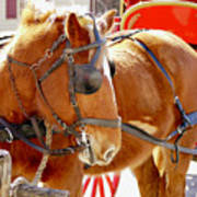 Williamsburg Carriage Horse Poster