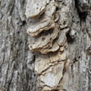 Willow Tree Bark Up Close Poster