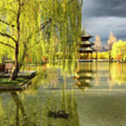 Willow Tree In Liiang China II Poster