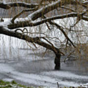 Willow Tree On The Frozen Lake Detail Poster