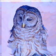 Wind Blown Owl  Poster