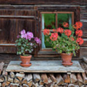 Window And Geraniums Poster by Yair Karelic