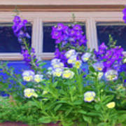 Window Box With Pansies Poster