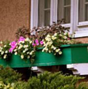 Window Flower Box Poster
