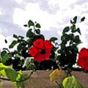 Window Flowers Poster