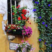 Window Garden In Arles France Poster