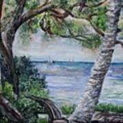 Window On Pine Island Poster