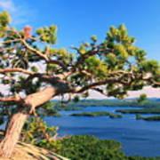Windswept Pine On Rattlesnake Mountain Poster