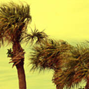 Windy Palms Poster