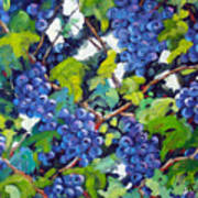 Wine On The Vine Poster by Richard T Pranke