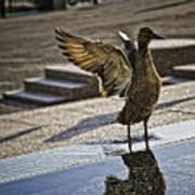 Winged Bird Poster