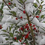 Winter Berries In Watercolor Poster