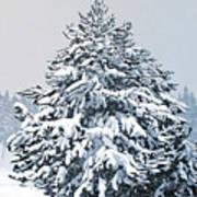Winter Blanket Poster