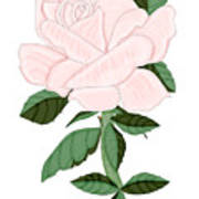 Winter Blush Rose Poster