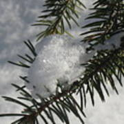 Winter Evergreen Poster