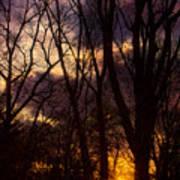 Winter Forest Sunrise Poster