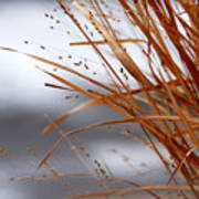 Winter Grass - 2 Poster