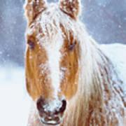 Winter Horse Portrait Poster