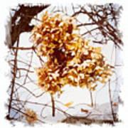 Winter Hydrangea Poster