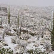 Winter In The Desert Poster by Sandra Bronstein