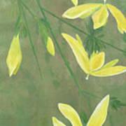 Winter Jasmine Poster