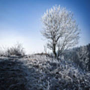 Winter Landscape Of Trees Covered With Frost Poster