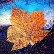 Winter Leaf Poster
