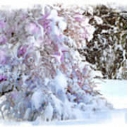 Winter Lilac Poster