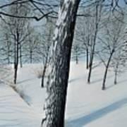 Winter Maple Poster