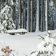 Winter Moments In Harz Mountains Poster