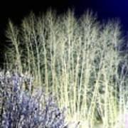 Winter Moonlight Poster