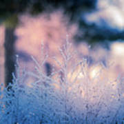 Winter Morning Light Poster