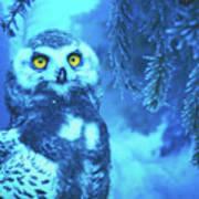 Winter Owl Poster
