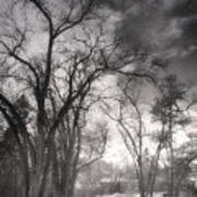 Winter Pathways Poster