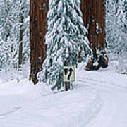 Winter Road Into Sequoia National Park Poster