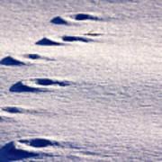 Winter Sand Poster