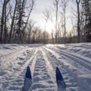 Winter Sport X-country Skis In Sunny Forest Tracks Poster