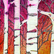 Winter Sunset Birch Poster