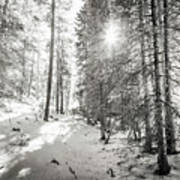 Winter Sunshine Forest Shades Of Gray Poster