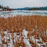 Winter Swamp Poster