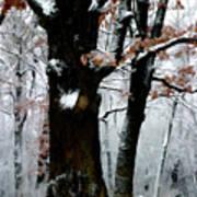 Winter Tree-left Poster
