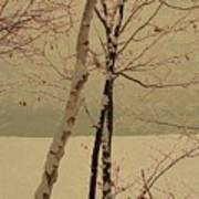 Winter Tree Over Bay Poster