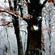 Winter Tree Right Poster