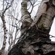 Winter Tree Poster