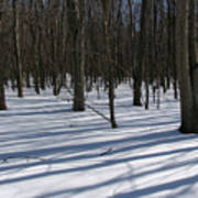 Winter Trees In Snow With Shadow Lines Poster