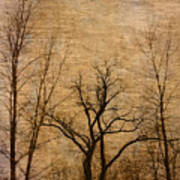 Winter Trees In The Bottomlands 2 Poster